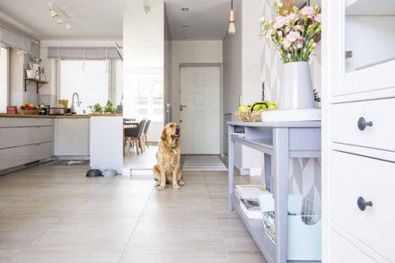 Pets: 8 cuidados que precisa ter ao alugar um imóvel